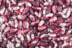 Many raw red spotted beans Stock Photography