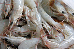Many raw shrimp as garnish in cooking. Stock Image