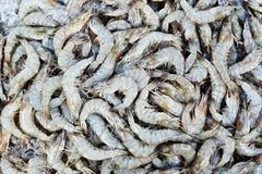 Many raw shrimp background Royalty Free Stock Photo