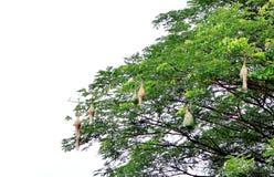Many real bird's nest Royalty Free Stock Photo