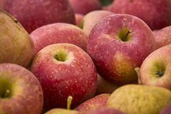 Red apples with nuances. Many red apples in a basket at the market Royalty Free Stock Photo