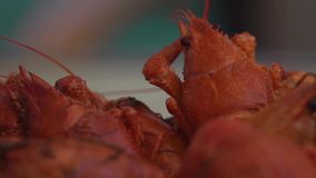 Many Red Boiled Crayfish on Plate. Shot with a Sony RX10 IV fps29,97 FHD stock video