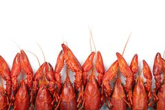 Many red crayfish. Prepared many red crayfish on white background Royalty Free Stock Images