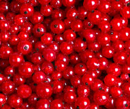 Many red currants as a texture Royalty Free Stock Photo