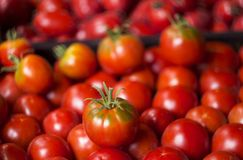Many red and green tomatoes, background. A lot of vegetables. He. Althy food Royalty Free Stock Image