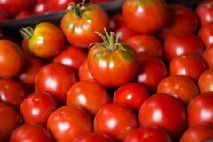 Many red and green tomatoes, background. A lot of vegetables. He. Althy food Royalty Free Stock Photo