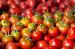 Many red and green tomatoes, background. A lot of vegetables. He. Althy food Royalty Free Stock Images