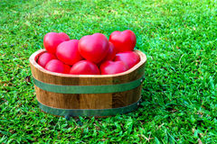 Many Red Heart in Bucket on green grass Stock Photo