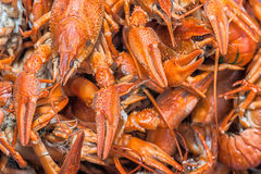Many red lobsters for sale Stock Image