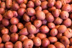 Many red potatoes Stock Photo