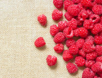 Many red ripe raspberry fruit Stock Photography