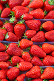 Many red ripe strawberries. Royalty Free Stock Photography