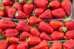 Many red ripe strawberries. Royalty Free Stock Photo
