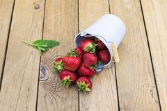 Many red ripe strawberries on a wooden table in the garden in a Royalty Free Stock Photography