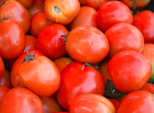 Tomato red Stock Photos