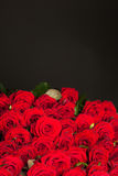Many red roses Stock Photography