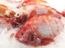 Many Red Snappers on ice stall for sale Royalty Free Stock Photo