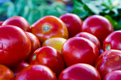 Many red tomatoes Stock Images