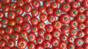 Many red tomatoes Royalty Free Stock Photos