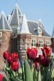 Many red tulips are in front of the house. In Amsterdam in the day Stock Photography