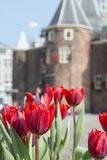 Many red tulips are in front of the old building. In Amsterdam in the day Royalty Free Stock Photos