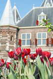 Many red tulips near the old house in Amsterdam. In the day Royalty Free Stock Photo