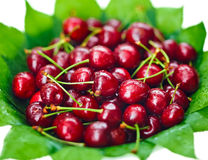 Many red wet cherry fruits. (berries) on green leaves in round plate, on white Stock Image