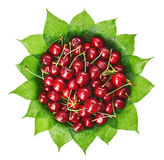 Many red wet cherry fruits on green leaves. Many red wet cherry fruits (berries) on green leaves in round plate, isolated on white Stock Photography