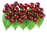 Many red wet cherry fruits on green leaves. Many red wet cherry fruits (berries) on green leaves, isolated with copy space design ready Royalty Free Stock Photography