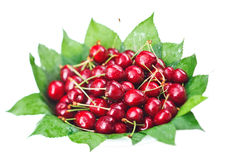 Many red wet cherry fruits on green leaves. Many red wet cherry fruits (berries) on green leaves in round plate, isolated on white Stock Photo