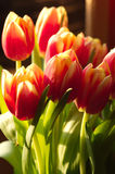 Many red and yellow tulips closeup vertical Stock Photo