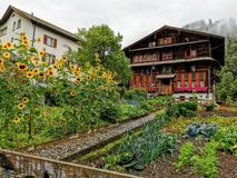 Urban garden in the resort mountain town of Elm Switzerland