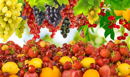 Many ripe berries and fruit Stock Photos