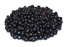 Many ripe black currant berries isolated Stock Photo