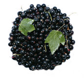 Many ripe black currant berries isolated Royalty Free Stock Images