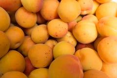 Many ripe fresh orange apricots. In summer Stock Photo