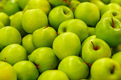 Many ripe green apples Stock Image