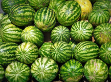 Many ripe green watermelons. Stock Image