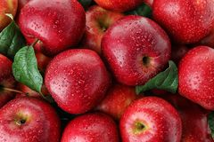 Many ripe juicy red apples covered with water drops. As background royalty free stock images