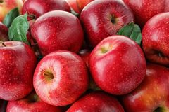 Many ripe juicy red apples. As background stock images