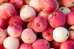 Many ripe red apples natural background Stock Images