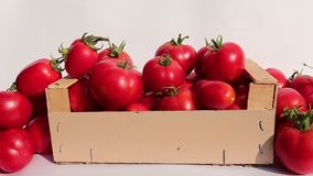 Many of ripe red tomatoes in a box stock video