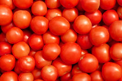 Many ripe red tomatoes Royalty Free Stock Images