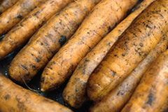 Many ripe red wet carrots in a pile side view closeup. Many wet ripe red carrots in a pile side view extreme close up Stock Images