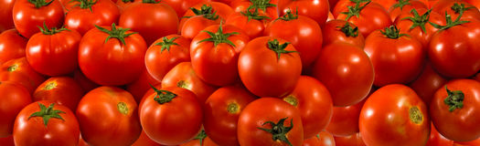 Many ripe tomatoes closeup Royalty Free Stock Image