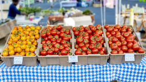 Many ripe tomatoes in totes and marked for sale Royalty Free Stock Image