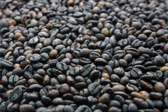 Many roasted coffee beans are ingredient of cappuccino, espresso. Many roasted coffee beans are ingredient of cappucino, espresso, mocha for awake in the morning Royalty Free Stock Photography