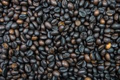Many roasted coffee beans are ingredient of cappucino, espresso,. Mocha for awake in the morning Royalty Free Stock Images