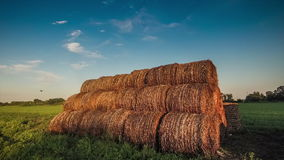 Many rolls of hay stock footage