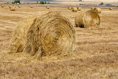 Many rolls of straw in a field Royalty Free Stock Photo